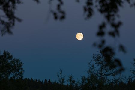 Full moon at night sky and trees