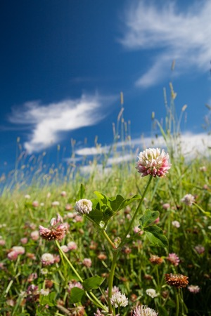 Beautiful flowers at summer day Stock Photo