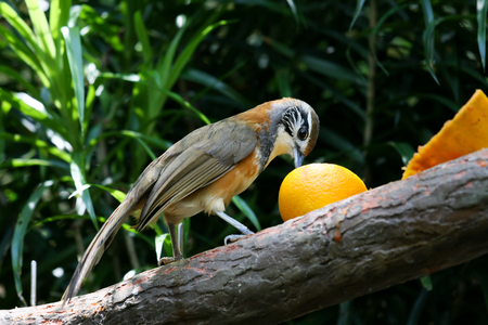 Small beautiful exotic bird in aviary park Banco de Imagens