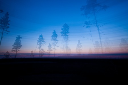 Trees silhouttes and sky abstract landscape long exposure Stock fotó