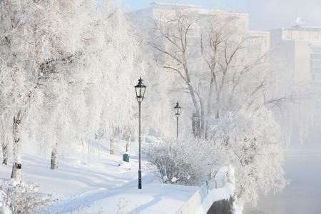 Niebla helada mañana de invierno en el parque de la ciudad