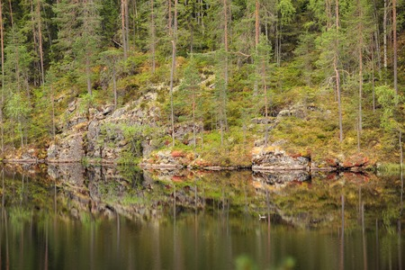 Landscape reflection from forest lake surface in Finland Фото со стока