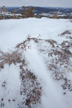 Snow and twigs on the ground at arctic hill winter