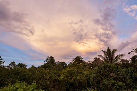 Tropical colorful vibrant sunset clouds and trees background Imagens