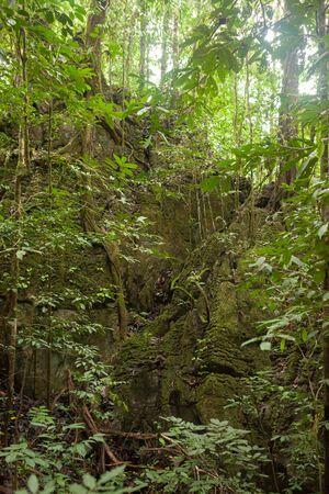 Lush rainforest scene at Borneo Malaysia nature Banco de Imagens