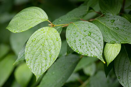 Water drops on green leaves after rain fresh nature detail 免版税图像