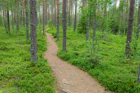 Small path trail in Finnish forest nature landscape Stok Fotoğraf