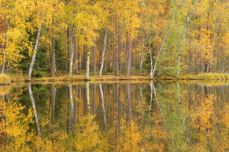 Serene calm autumn landscape at forest lake
