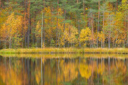 Serene calm autumn landscape at forest lake