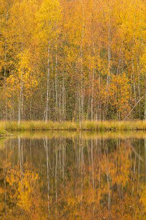 Ruhige ruhige Herbstlandschaft am Waldsee Standard-Bild