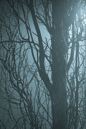 Abstract tree branches at foggy night lit by streetlamp