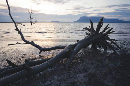 Dead tree in muddy beach at twilight low tide