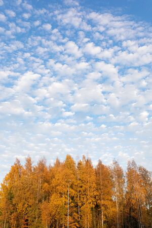 Trees against cirrocumulus clouds at autumn day