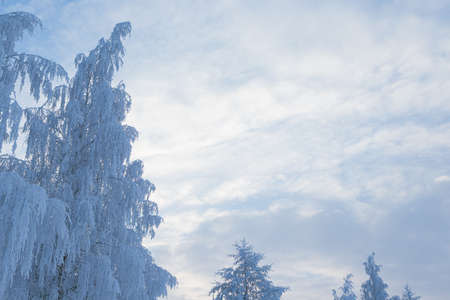 Tree covered in hoarfrost and sky at winter day
