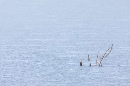 Reeds in frozen lake at day in Finland 免版税图像
