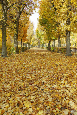 Path littered with autumn leaves, Park of Schoenbrunn castle in autumn, Vienna, Austria LANG_EVOIMAGES