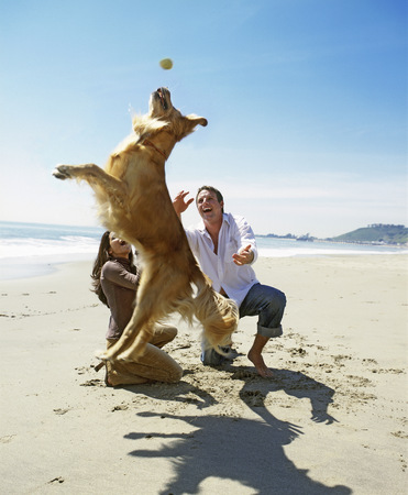 View of a coupe playing with golden retriever on the beach LANG_EVOIMAGES