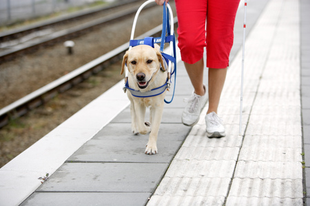 Blind woman and seeing eye dog at train station LANG_EVOIMAGES