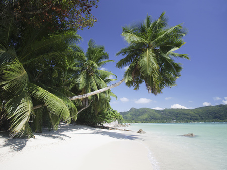 Palm trees over beach, Anse A La Mouche, Mahe, Seychelles