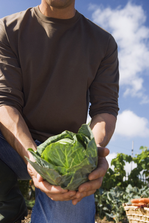 Man holding fresh cabbage from vegetable garden, close-up, mid-section