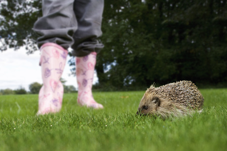 Girl standing next to hedgehog on grass