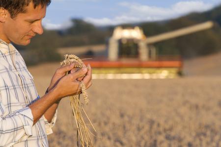 Farmer inspecting wheat LANG_EVOIMAGES