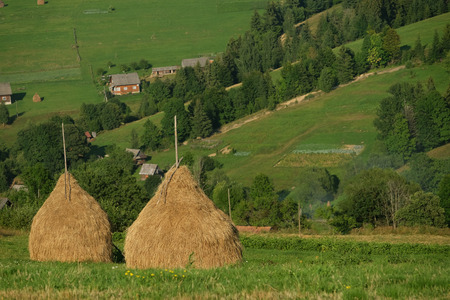 Haystacks on beautiful summer plateau in Carpathian mountain. view on summer rural landscape with haystacks near forest. Green valley. Stock Photo