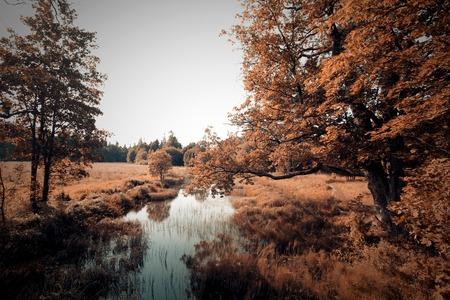 autumn landscape, near  river, warm tones Stock Photo