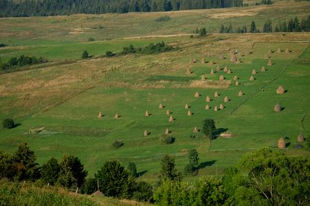 haycock: Haystacks on beautiful summer plateau in Carpathian mountain.
