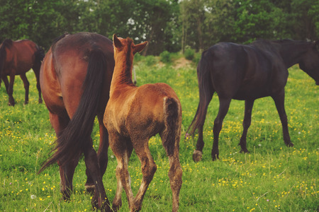 Horse and foal on green grass, summer Stock Photo