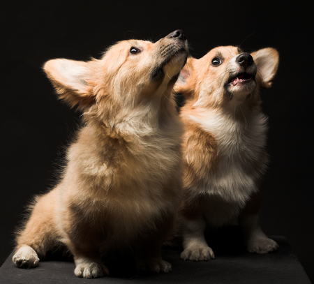 Two puppies. close up Stockfoto