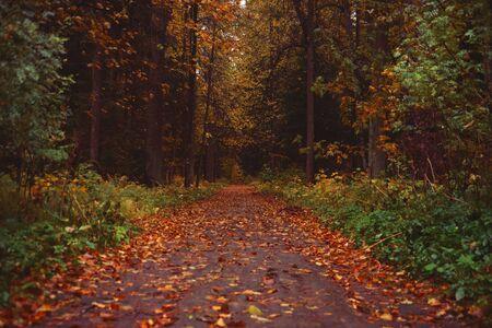 Beautiful autumn park. Park for relax Standard-Bild