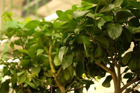 green plants in pots in garden store spring. Фото со стока