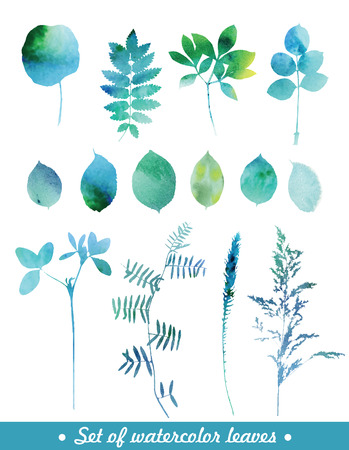 botanical gardens: Set of blue watercolor leaves and grass.