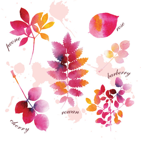 Set of beautiful watercolor autumn leaves on white background.