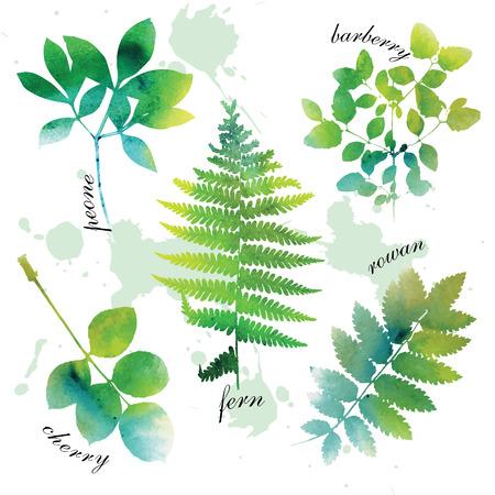 Conjunto de hermoso color verde de la acuarela hojas sobre fondo blanco. Ilustración de vector