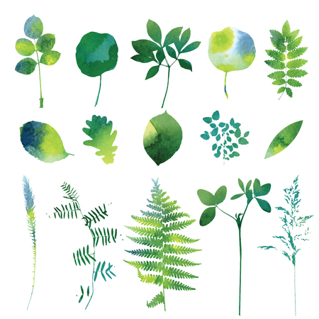 Set of green watercolor leaves and grass. Illustration