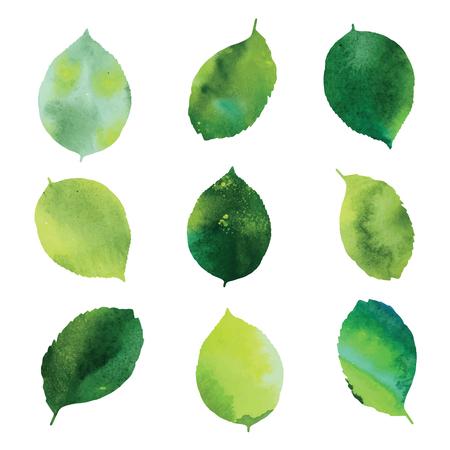 Zestaw zielonych liści akwarelowych.