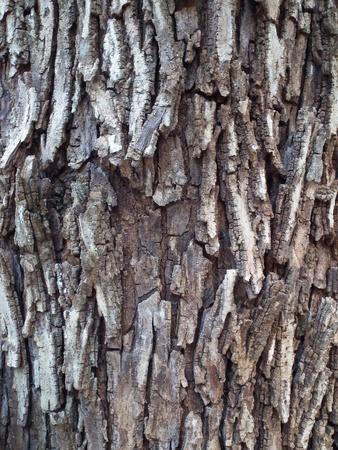 Bark Texture Banque d'images