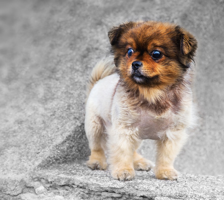 Portrait of a cute little dog on a grey concrete
