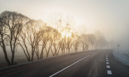 Morning trees in the fog near the road with a road sign. Sunrise.