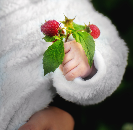 Baby hand with natural rasberries and green leaves. Close up. Stockfoto