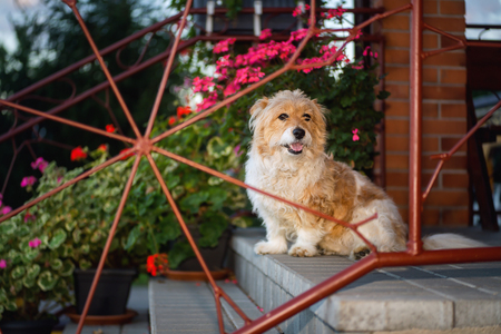 Beautiful dog sitting on concrete stairs with metal fence
