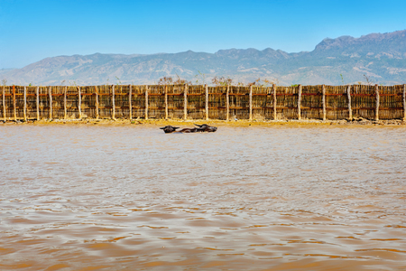 Two oxes in a fenced water body on sunny day. Myanmar. Stockfoto