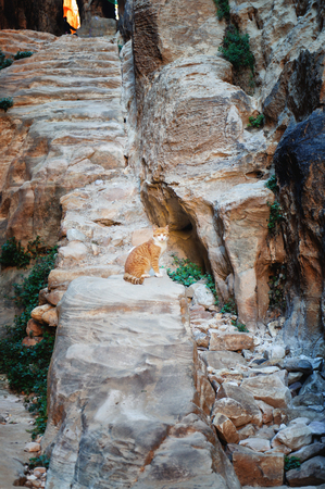 Cat on  stairs in  mountains of Petra. Jordan.