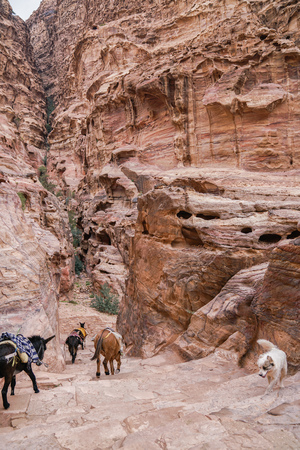 Donkeys and dog in an ancient abandoned rock city of Petra in Jordan.