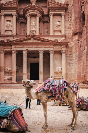 Camels in an ancient abandoned rock city of Petra in Jordan.