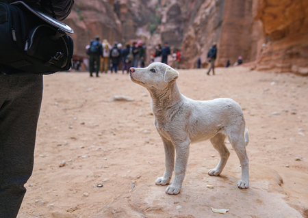 Dog in an ancient abandoned rock city of Petra in Jordan.