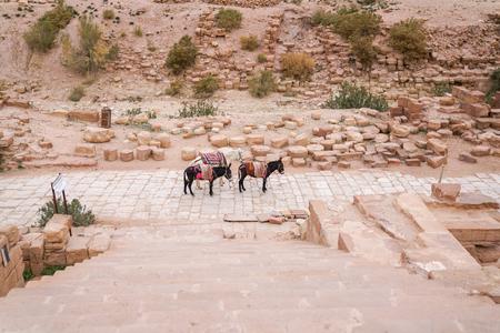 Three donkeys near Brown University Excavation stone stairs, Great Temple, Petra archaeological park,  Jordan