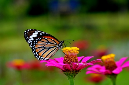 butterfly on flower: butterfly